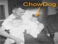 ChowDog