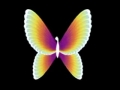 The NBC Butterfly