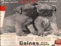 Almost Too Cute 1950 Mag Ad