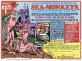 Amazing Sea Monkeys