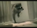 Mission Impossible  Racoon