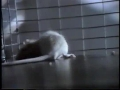 1988 Cocaine Rat PSA - Partnership for a Drug-Free America