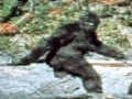 Roger Patterson Bigfoot Film 1967