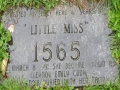 Little Miss 1565 Mystery
